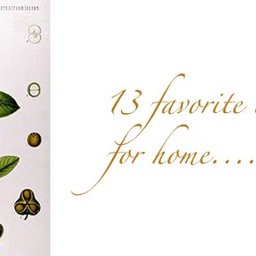 13 favorite tea herbs for home